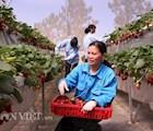 Nông nghiệp công nghệ cao đang là lợi thế để Lâm Đồng phát triển du lịch canh nông. Ảnh: Văn Long.