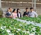 Giao lưu học hỏi giữa các thế hệ nông dân (Ảnh chụp trước ngày 27/4)