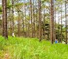 Những người đi hái nấm thường là nhóm nhỏ trong gia đình