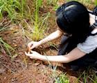 Hái nấm rừng không yêu cầu kỹ thuật đặc biệt, chỉ dùng tay nhẹ nhàng