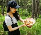 Nhiều niềm vui khác từ các chuyến đi hái nấm rừng thông…