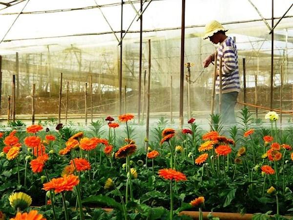 Đà Lạt - Xứ sở ngàn hoa