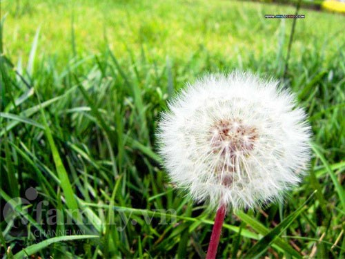 Một loài hoa dại