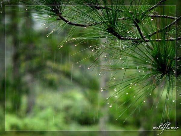 Đà Lạt vẫn đẹp ngay cả mùa mưa