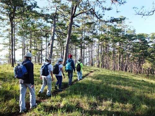 5 km đi bộ dưới rừng thông là trải nghiệm tuyệt vời trên tuyến đường chinh phục Bidoup