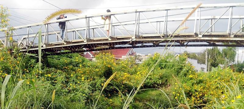 Chụp hình bên cầu hoa vàng gần thác Cam Ly