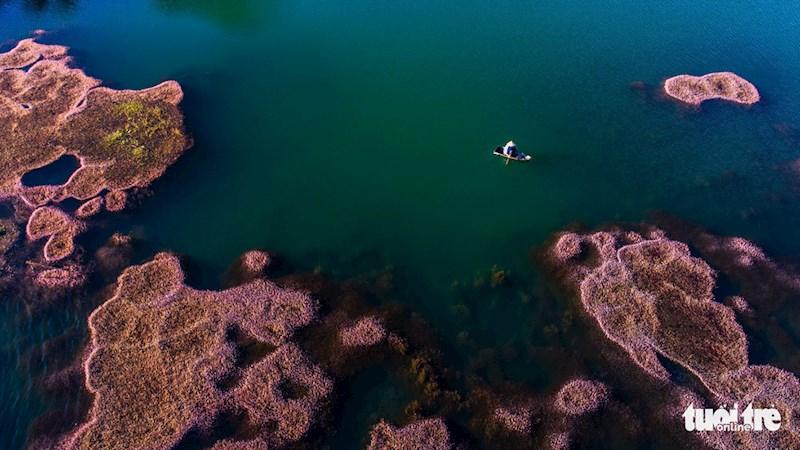 Hồ nước có tảo hồng nở hoa nằm ở vùng ngoại ô thuộc xã Đam B'ri (TP. Bảo Lộc, tỉnh Lâm Đồng)