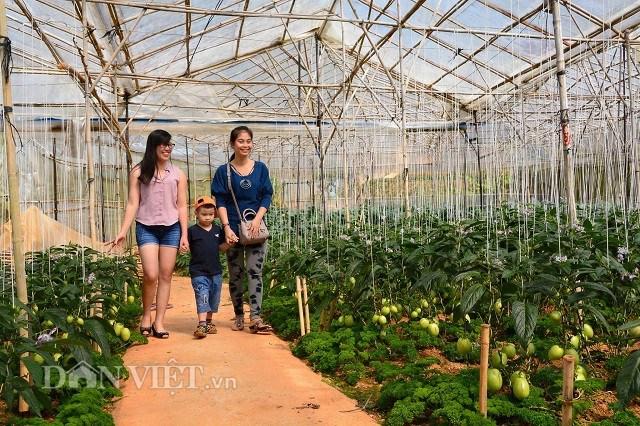 Tuy nhiên, cơ sở hạ tầng các khu du lịch canh nông tại Lâm Đồng vẫn chưa đáp ứng được yêu cầu đề ra.