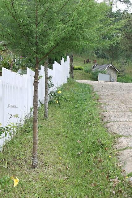 Thung lũng vàng - hàng rào
