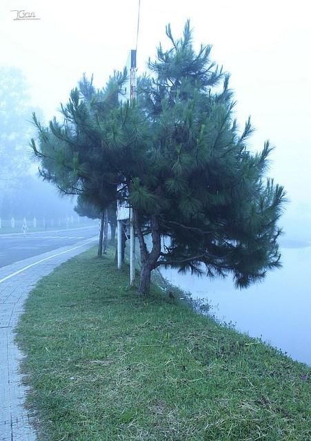 Sương sớm