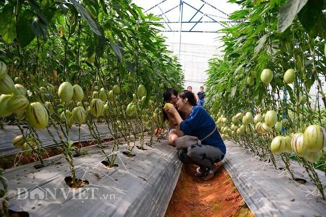 """Lâm Đồng cần thực hiện nhiều tour du lịch """"1 ngày làm nông dân"""" để du khách trải nghiệm thực tế khi"""