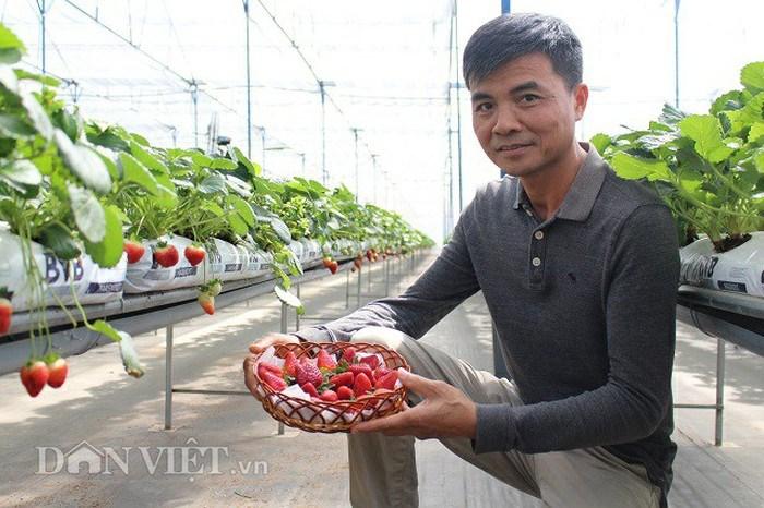 Ông Minh bên những quả dâu tây trong trang trại của mình sản xuất