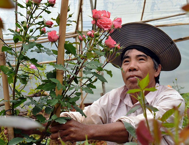 Chủ nhân Trần Văn Đắt giữa vườn hoa hồng đa sắc màu mới lạ. Ảnh: V.Việt