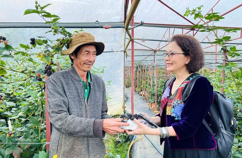 Vườn phúc bồn tử của ông hàng xóm Nguyễn Nam có nhiều điều thú vị… (Ảnh chụp trước ngày 27/4)