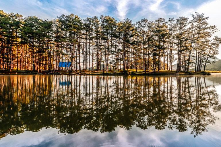 Rừng thông soi bóng bên hồ. Ảnh: Thụy Trang